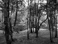 Coba mayan ruins of in the jungles of quintana roo mexico Royalty Free Stock Photos