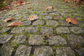 Cobbled stones road old close up with autumn leaves and green grass Royalty Free Stock Photography
