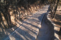 Cobblestone footpath the walkway in trees Royalty Free Stock Photos