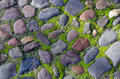 Cobblestone pavement with moss on boards Royalty Free Stock Images