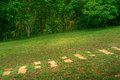 Cobblestone walkway in grass field and forest Royalty Free Stock Photo