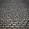 Cobblestones old road with large and a dead leaf Royalty Free Stock Photos