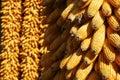 Cobs kukurydzani Fotografia Royalty Free