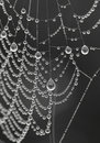 Cobweb Stock Photo