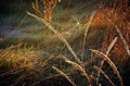 Cobweb on autumn grass on a meadow in the morning sun Royalty Free Stock Photo