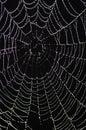 Cobweb with glistening dewdrops Royalty Free Stock Photo
