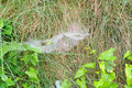 Cobweb in the grass closeup of wet Royalty Free Stock Photography