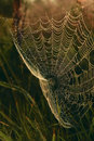 Cobweb in grass meadow Royalty Free Stock Photo