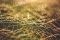 Cobweb macro abstract Royalty Free Stock Photo