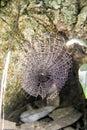Cobweb in phukradueng loei thailand Royalty Free Stock Image