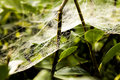 Cobweb on the plant in the morning Royalty Free Stock Images