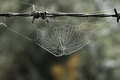 Cobweb with small dews during fog in the morning Stock Images