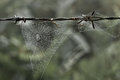 Cobweb with small dews during fog in the morning Stock Photo