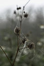 Cobweb with small dews during fog in the morning Royalty Free Stock Photography