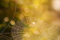 Cobweb summer Stock Photos