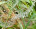 Cobweb water drops on a in grass Royalty Free Stock Images
