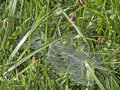 Cobweb woven in the grass Stock Images