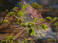 Cobwebs on the branch the landscape of the northern nature Stock Photo