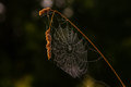 Cobwebs on the stalk of grass closeup with beads dew Stock Images