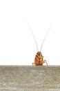 Cockroach climbing on wood plank Stock Photo