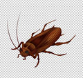 Cockroach on transparent background