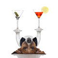 Cocktail dog balancing two fancy martinis with paws Stock Photo