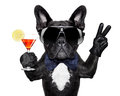 Cocktail dog with martini and victory or peace fingers Stock Photos