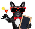 Cocktail party dog Royalty Free Stock Photo