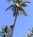 Coco Climber In Village, Negro...