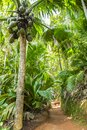 Coco de Mer palm in Seychelles Royalty Free Stock Photo