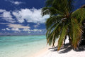 Coco palm on the white sandy beach of Pacific. Royalty Free Stock Photo