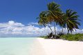 Coco palms on the beach, Paris,  Kiritimati Island. Royalty Free Stock Photo