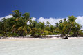 Coco palms on the white sandy beach. Royalty Free Stock Photo