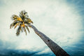 Coco trees on the beach tree with bule sky Royalty Free Stock Image