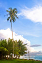 Coco trees tree with bule sky Royalty Free Stock Photo