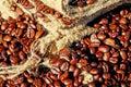 Cacao fagiolo,, cibo