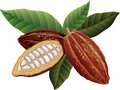 Cacao fagioli