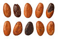 Cocoa Beans (with clipping path) Royalty Free Stock Photography
