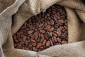 Cocoa beans in a jute bag full with Royalty Free Stock Image