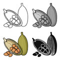 Cocoa fruit icon in cartoon style isolated on white background. Herb an spices symbol stock vector illustration.