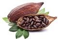 Cacao pezón