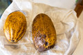 Cocoa pods cacao pod Royalty Free Stock Image