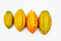 Cocoa pods small to large Royalty Free Stock Photo