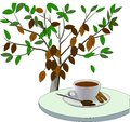 Cocoa tree and a Cup of cocoa drink