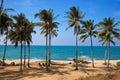 Cococut trees along a sandy beach Royalty Free Stock Photo