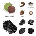 Coconut, acorn, sunflower seeds, manchueian walnut.Different kinds of nuts set collection icons in cartoon,black style