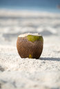 Coconut on the beach background of ocean Stock Photos