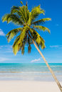 Coconut beach on daylight at in thailand Royalty Free Stock Photo