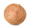 Coconut close up isolated on white background Royalty Free Stock Images