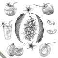 Coconut collection hand drawing vintage stlye
